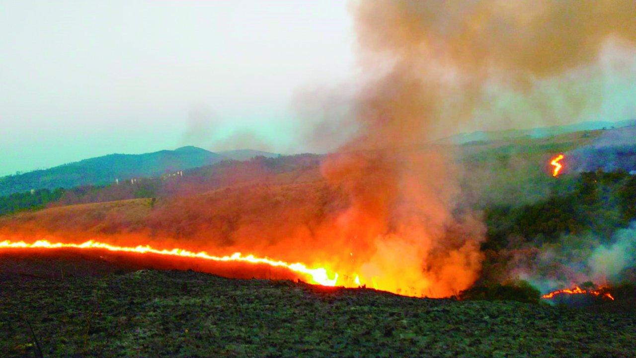 Incendio_parqueSP-1280x720.jpg
